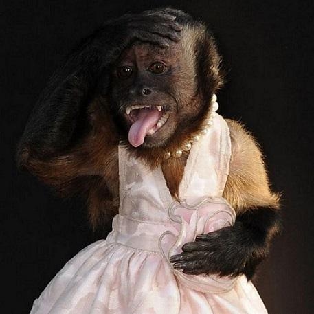 Обезьяна в платье на новый год обезьяны