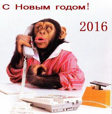 Обезьяна с телефоном