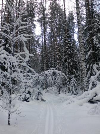 Моя лыжня