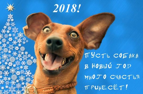 Радостная собака на новый год