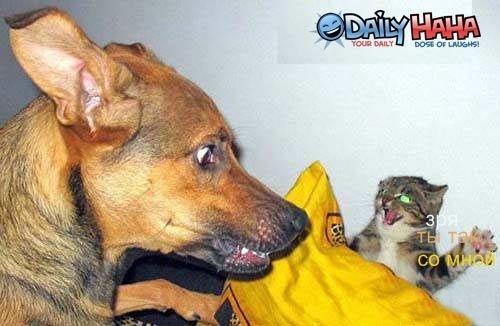 Стихи кота и собаку