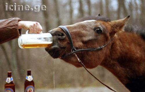 Лучший алкоголь в домашних условиях 78
