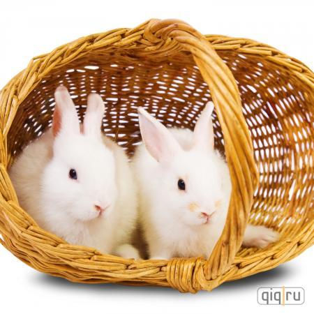 Пара кроликов в подарок на 8 марта