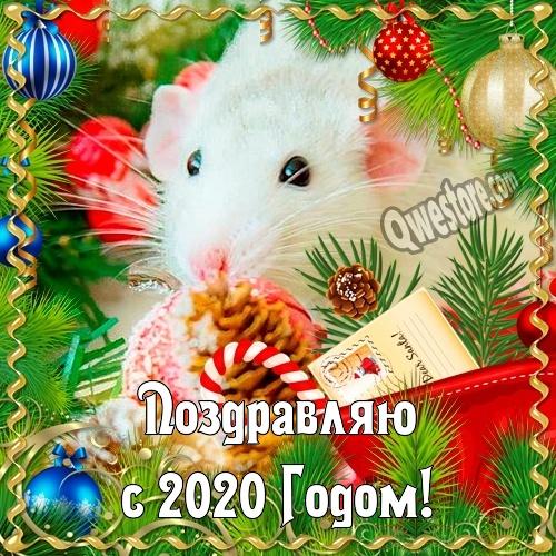 С Новым Годом Крысы 2020!