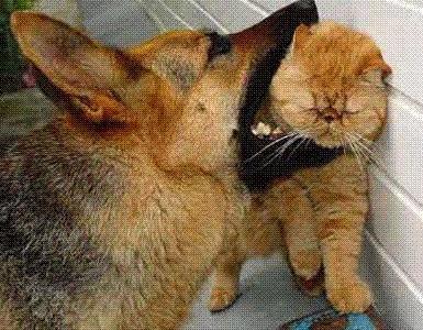 Поздравления кота и собаки