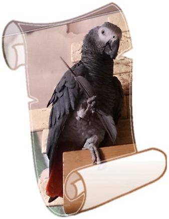 Попугай Риша пишет рецу графоману