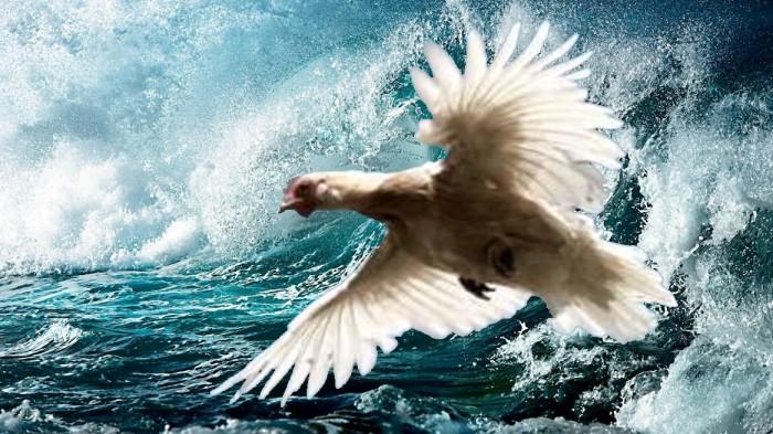 Курица в полёте. Куриная романтическая песня.
