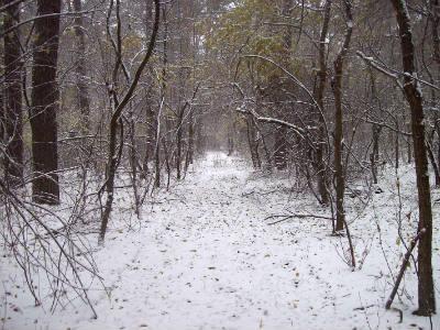 13.11.2016 Пущанский лес