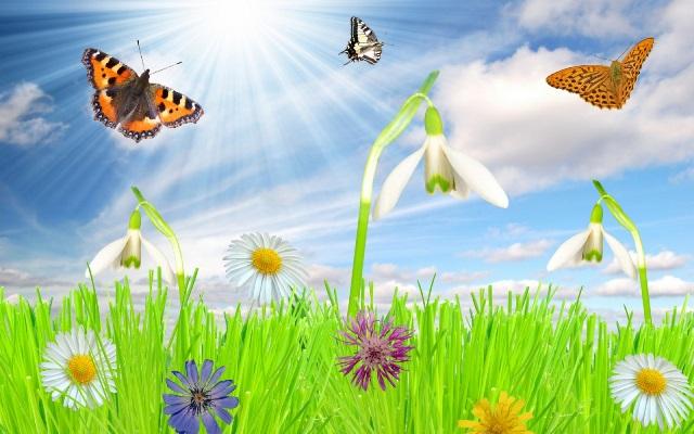этот список картинки рисовать к теме весна и ромашки необходимые
