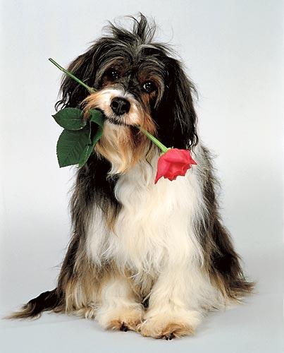 Пёс Идуси со светскими задатками
