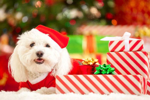 Собака Санта Клаус