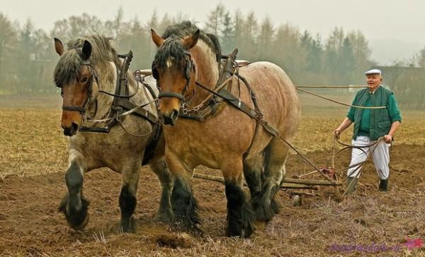 Сивой кобылы в год деревянной лошади