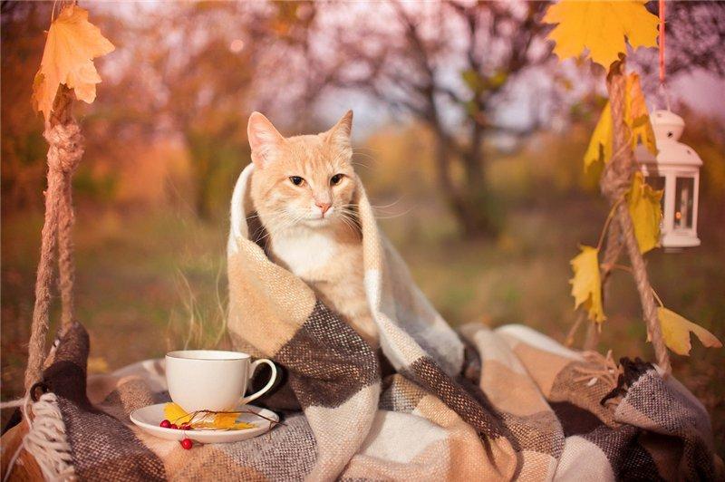 Кот и осень фото