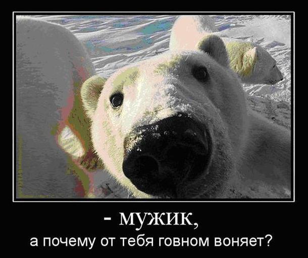 http://www.hohmodrom.ru/upload/57150/projimg/102745/hohmodrom_medvedb.JPG