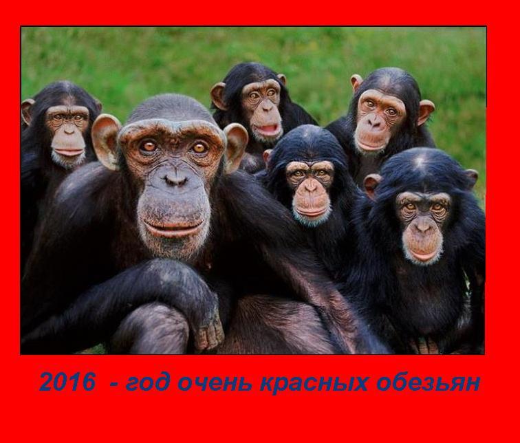 Где много диких обезьян