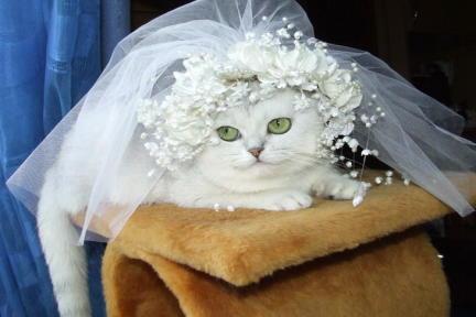 Короткие стихи про кожаную свадьбу себе